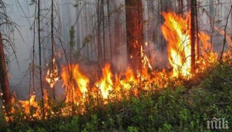 Огромен пожар избухна край Петрич