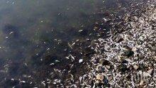 Тонове мъртва риба задръстиха язовир край Бургас – ето причината за измирането