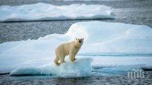 Арктическият лед се стопи до критичен минимум