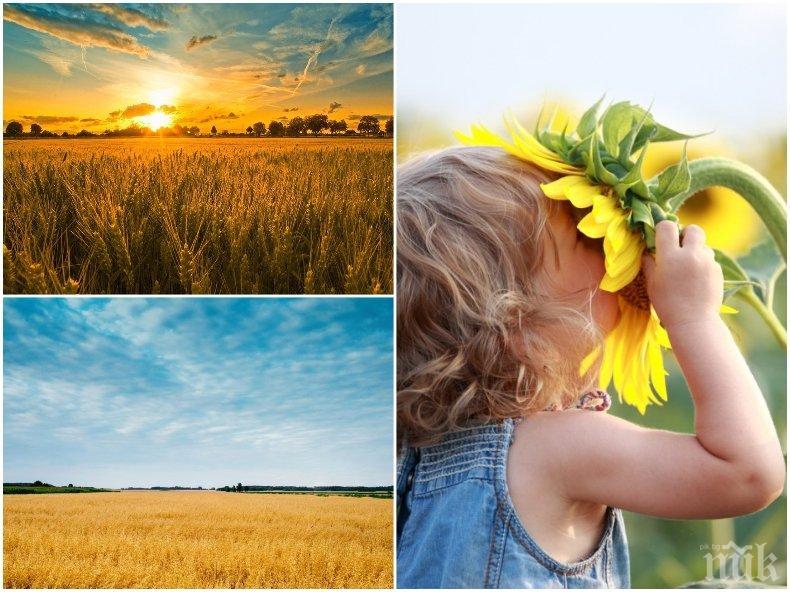 ЗЛАТНА ЕСЕН: Слънцето ще грее щедро, а температурите ще стигнат летни стойности от 30 градуса