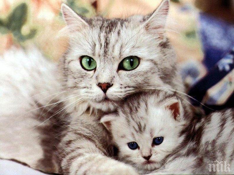 ДОКАЗАНО: Това са най-големите кошмари за домашните котки