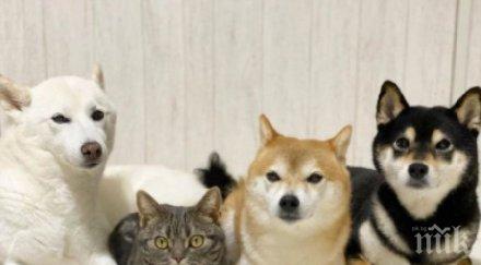 невероятно факт котка дружи три кучета бодигардове