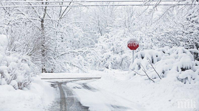 ПАНИКА: Първият сняг шокира животновъдите в Дупнишко