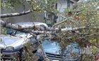 Дърво се стовари върху коли в центъра на Пловдив, смаза ги тотално