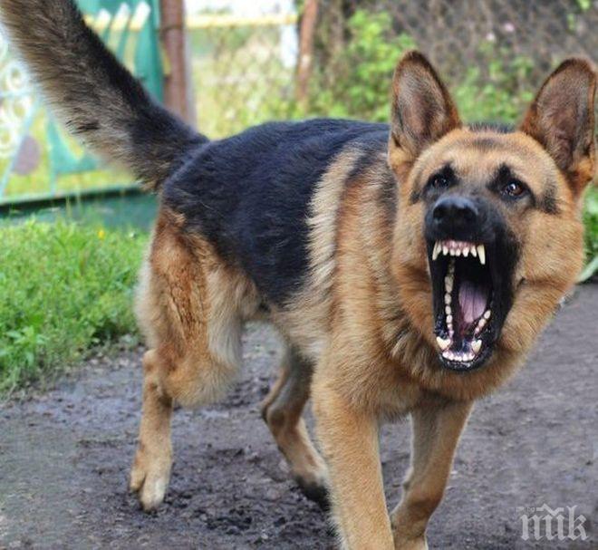 УЖАСНА ТРАГЕДИЯ: Кучета разкъсаха гениталиите на дете, то почина в адски мъки