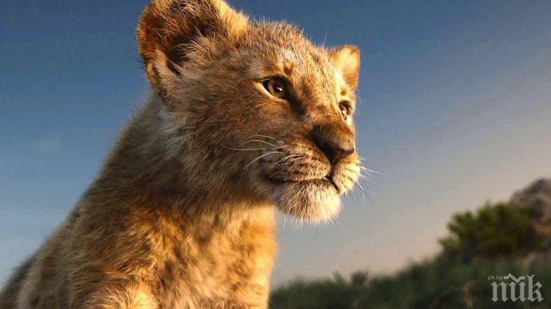 """Носител на """"Оскар"""" снима продължение на римейка за Цар Лъв"""