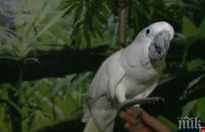 ВУЛГАРЕН ЕЗИК: Папагали псуват посетители в зоопарк – ето какви мерки предприеха срещу птиците