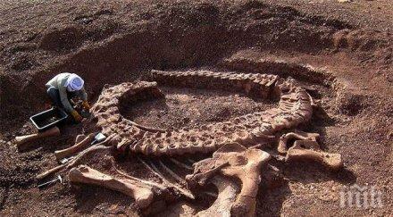 откриха нов вид динозавър