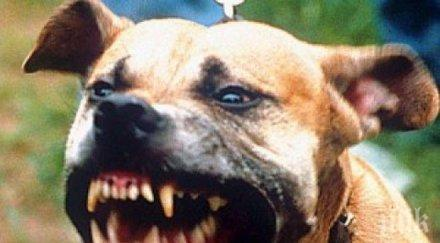 кървав екшън пловдив питбул захапа котарак мъж хвърли спасява устата звяра снимки