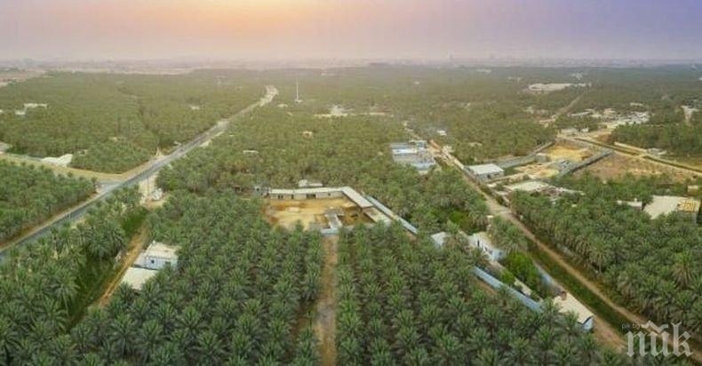 Район в Саудитска Арабия е най-големият самостоятелен оазис в света