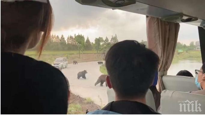 Мечки убиха служител в парк за диви животни в Шанхай