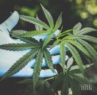 Задържаха двама пласьори на марихуана в Сливен