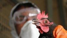 Птичи грип се настани в Белгия  успоредно с COVID-19