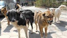 Бездомен пес наръфа полицайка, опитала да го спаси