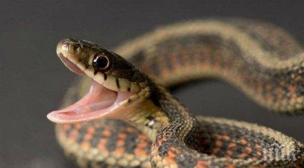 змия налетя прави секс градински маркуч
