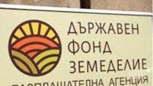 """6 млн. лева отпуска ДФ """"Земеделие"""" за целево кредитиране на зеленчукопроизводителите"""