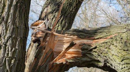 Мъж падна от дърво и загина на място