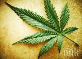 скопие легализира марихуаната коз развитие туризма