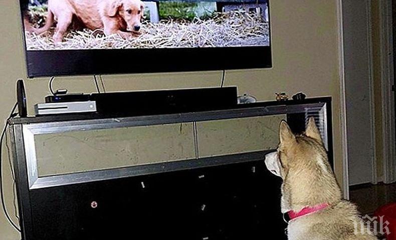 """Ето какво виждат кучетата и котките, когато """"гледат"""" телевизия"""