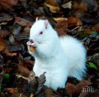 Заснеха много рядка катерица албинос (СНИМКИ/ВИДЕО)