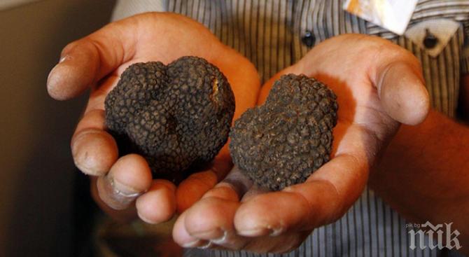 Погват ловците на трюфели, налагат им глоби според цените