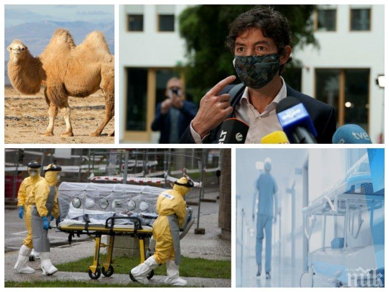 НОВА ЗАПЛАХА: Немски вирусолог бие камбаната - идва още един щам убиец! Заразата се пренася от камили и е от семейството на COVID-19