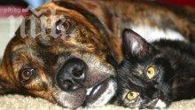 Откриха мъртви котки, кучета и лисица в Смолян