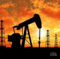 петролът брент поскъпна долара барел