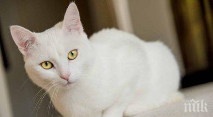 знак съдбата означава бяла котка пресече пътя