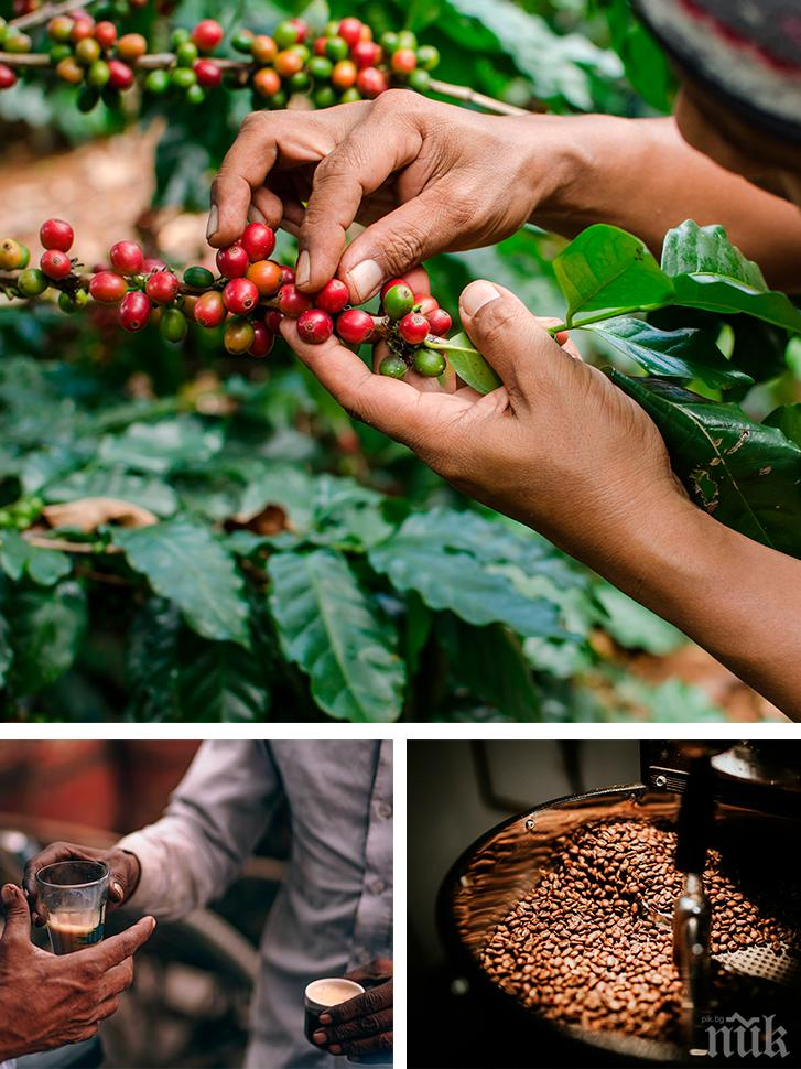 Ето откъде идва кафето и защо е вкусно