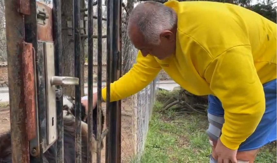 ПЪРВО В ПИК TV: Премиерът Борисов се прибра вкъщи - посрещна го най-верният му приятел (ВИДЕО/СНИМКИ)