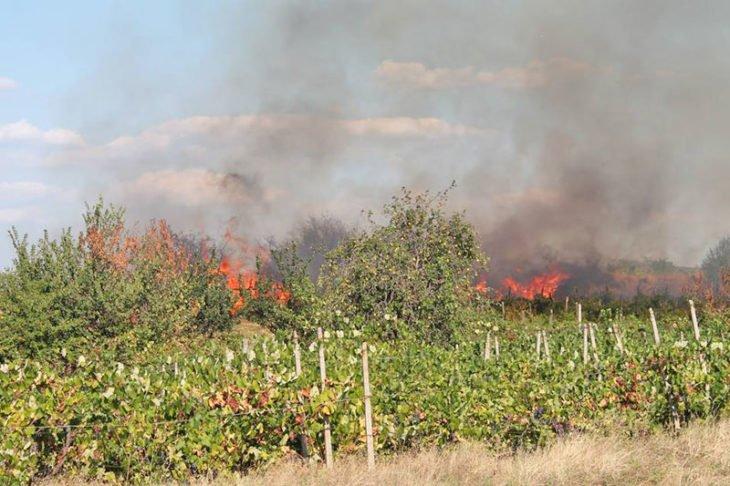 Пожар унищожи 150 декара лозя в района на Сливен