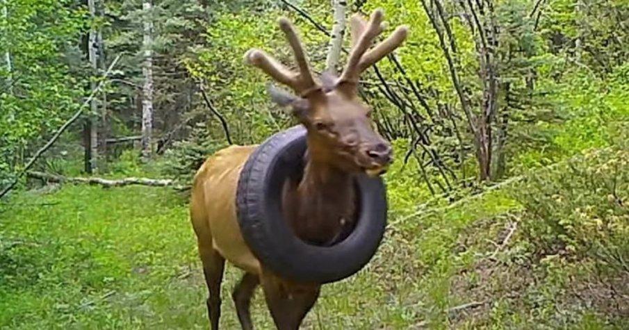 Щастлива развръзка - беше освободен от автомобилна гума, висяща на