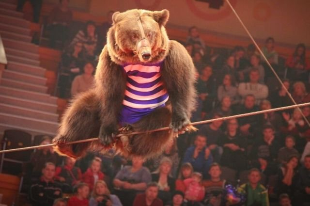 В руския град Орел по време на цирково представление нападна