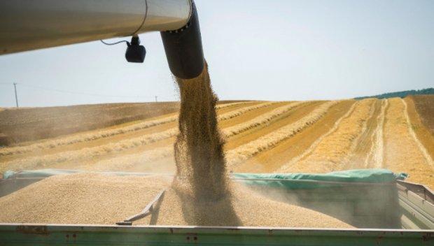 Сериозен ръст в добива на пшеница и ечемик в Бургаско