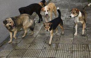 глутница бездомни кучета нападнаха годишно дете дупница