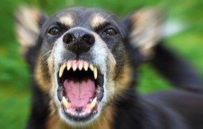 бездомно куче ухапа дете двора училище