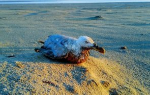 старата дива птица света измъти пиле годишна възраст