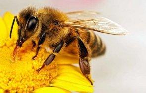зимната смъртност пчелите