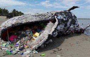 морето изхвърли два мъртви кита подозират натравяне пластмаса