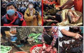 сзо призив спрете продажбата диви животни пазарите храни
