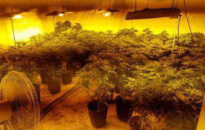 удар полицията разбиха две домашни оранжерии марихуана карлово сопот
