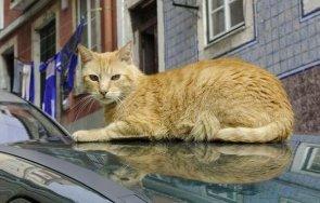 назначиха котка началник
