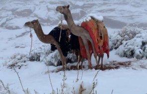 Дебели преспи сняг покриха Саудитска Арабия (ВИДЕО/СНИМКИ)