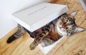 Айки в кутия