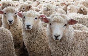 бабх отвърна фермерите виртуалните овце
