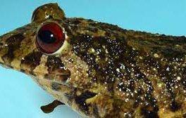 кръстиха нова жаба рок легендите лед цепелин