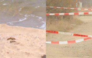 възрастен мъж открит мъртъв плажа царево