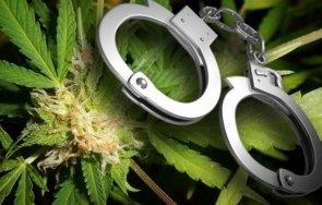 пращат съд трафикант марихуана северна македония