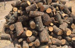 заловиха бракониери дърва поречието тунджа